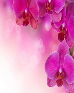 Flower Orchids Wallpapers apk screenshot