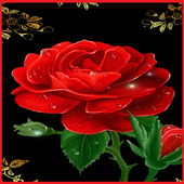 Rose Wallpapers icon