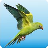 LoveBird icon
