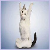 Mèo tập yoga hình nền icon