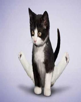 Mèo tập yoga hình nền poster