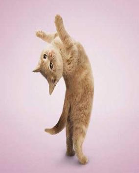 Mèo tập yoga hình nền apk screenshot
