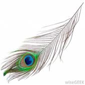 Peacock Wallpaper Live icon