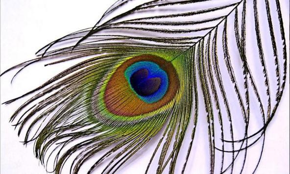 Peacock Wallpaper Live apk screenshot