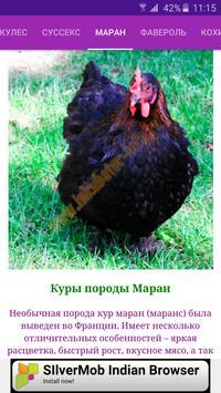 Breeds of chickens - Incubator screenshot 5