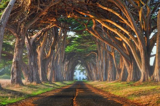 Tree Wallpapers apk screenshot