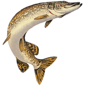 Все о рыбалке icon