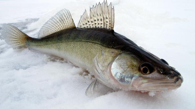 Все о рыбалке screenshot 14