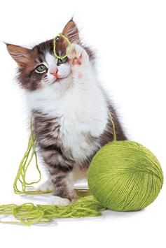 Cats Wallpapers screenshot 6