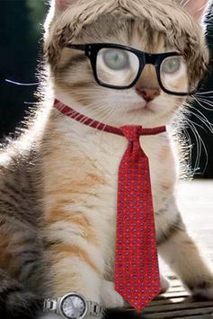 Cats Wallpapers screenshot 8