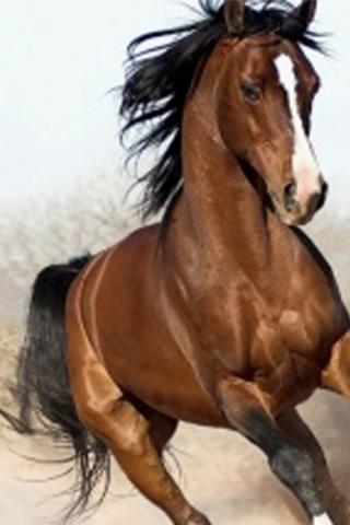 Arabian Horse Wallpapers For Android Apk Download