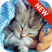 Sleeping Cat Wallpapers icon