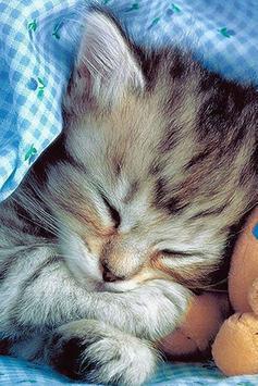 Sleeping Cat Wallpapers poster
