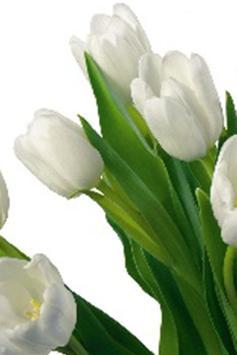 White Roses Wallpapers apk screenshot