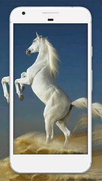 Horse Wallpaper HD screenshot 4