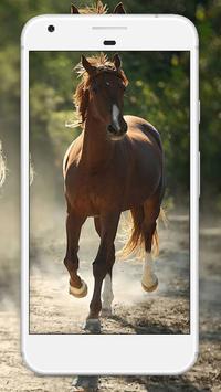 Horse Wallpaper HD screenshot 3