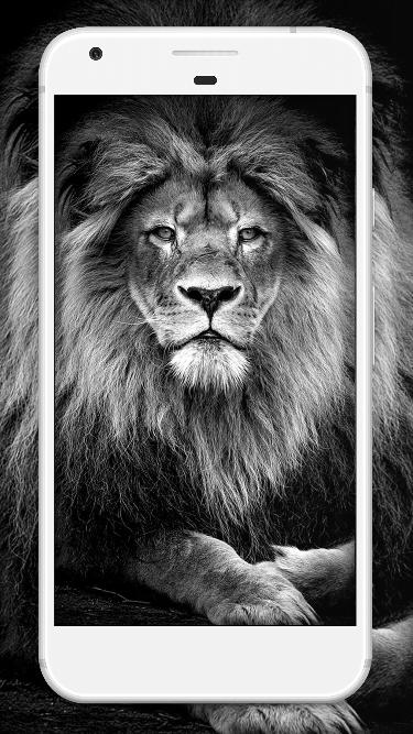 White Lion Wallpaper Hd For Android Apk Download