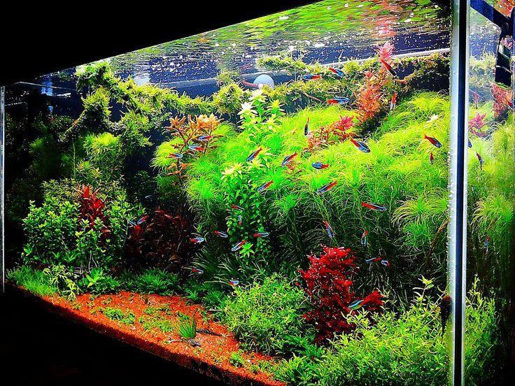 Aquascape Aquarium Design For Android Apk Download