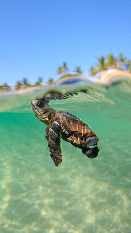 Turtle Wallpapers For Android Apk Download