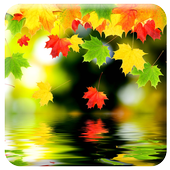 Live Autumn Wallpapers icon