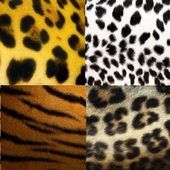 Tiger skin wallpapers HD icon