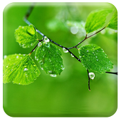 Live Fresh Leaves Wallpaper icon