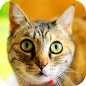 Favorite Cats Wallpapers icon