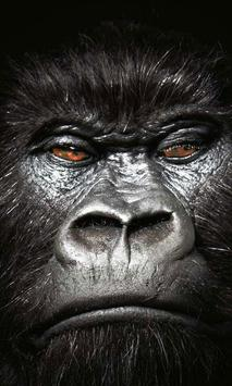 wallpaper gorillas poster