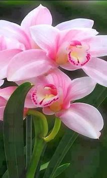 Orchid wallpaper apk screenshot