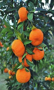 Orange wallpaper apk screenshot