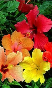 Beautiful flower 2 poster
