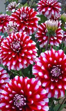 Beautiful flower 2 apk screenshot