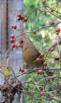 Bird 2 screenshot 3