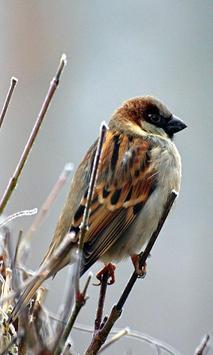 Bird 2 screenshot 4