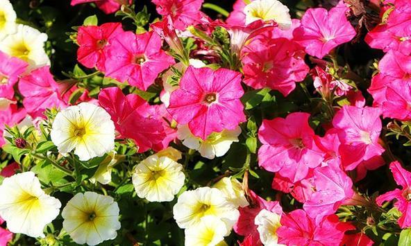 Floral screenshot 2