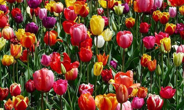 Floral screenshot 3