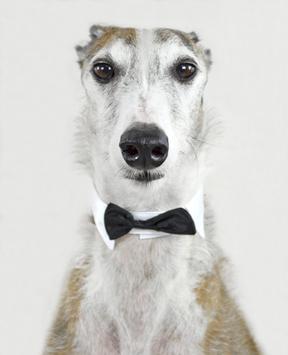 Greyhound screenshot 2