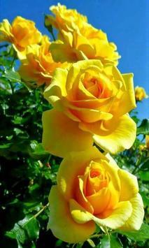 Roses screenshot 1