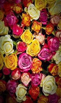 Roses screenshot 2