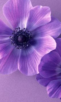 Violet flower apk screenshot