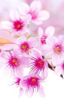 Sakura Flower Wallpaper HD poster