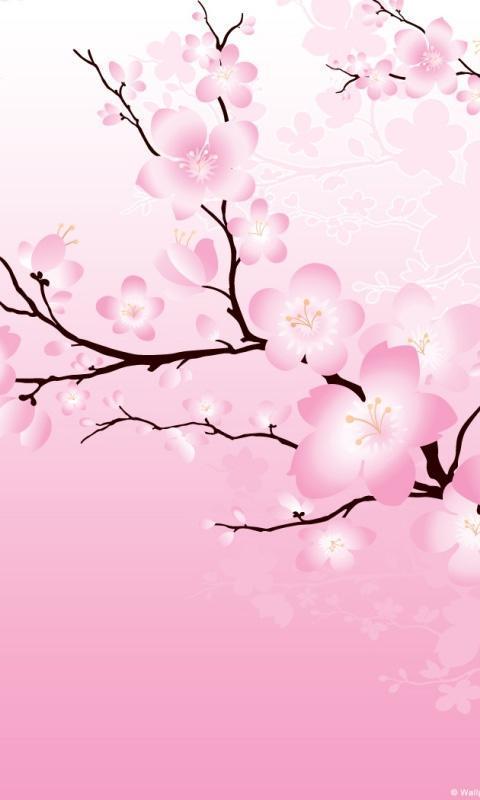 Sakura Flower Wallpaper Hd Telechargement D Apk Gratuits