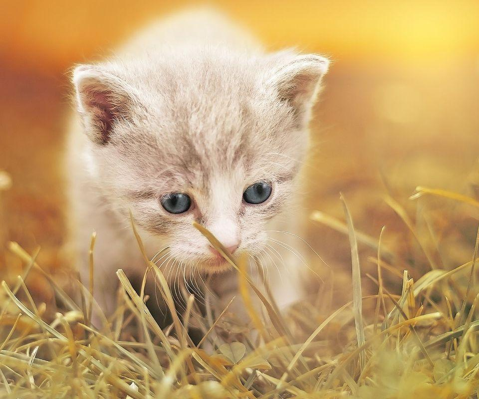 Cute Baby Animal Wallpaper For Android Apk Download