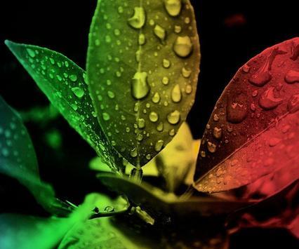 Leaf Wallpaper apk screenshot