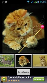 Funny Cats Live Wallpaper apk screenshot