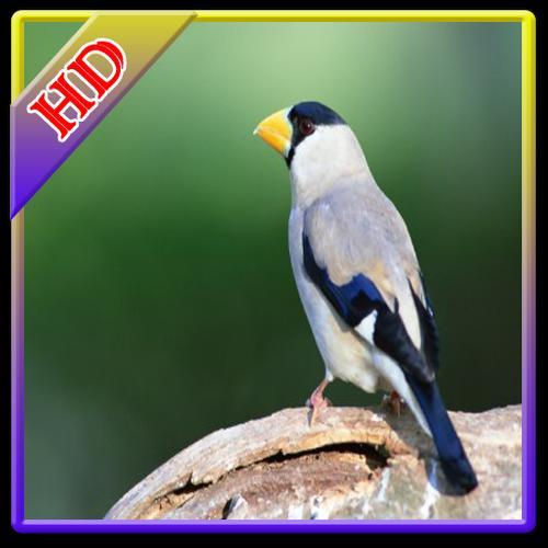 Download 5100 Koleksi Wallpaper Sayap Cantik HD Paling Keren