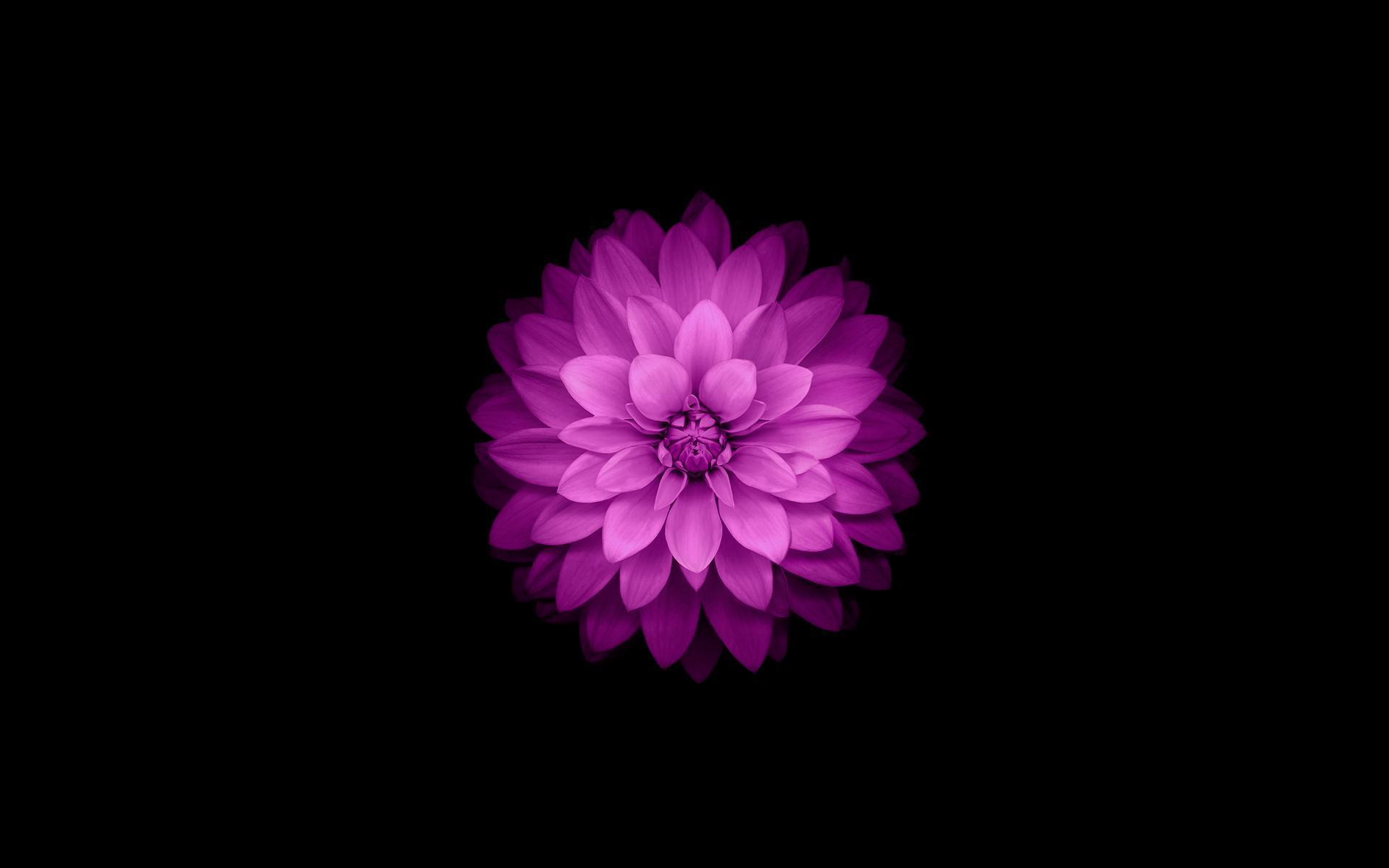 Dark Flower Wallpaper For Android Apk Download