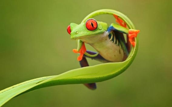 Frog Wallpaper For Android