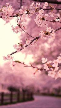 Sakura Wallpaper HD poster