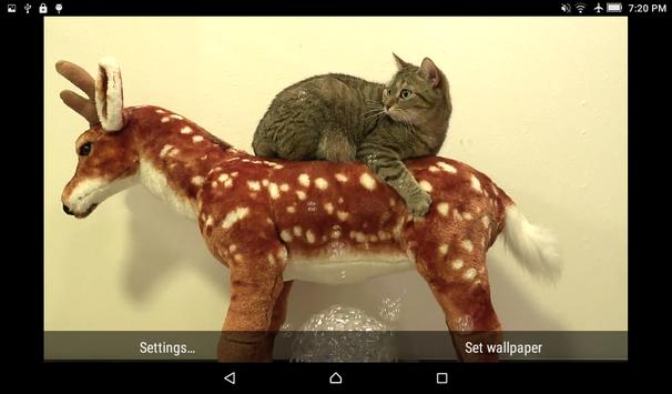 Cats & Bubbles Live Wallpaper screenshot 4
